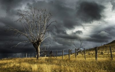 Storm-proof your trees for winter