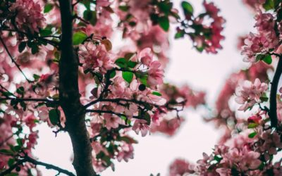 Ask an Arborist: Can You Trim Trees in Spring?