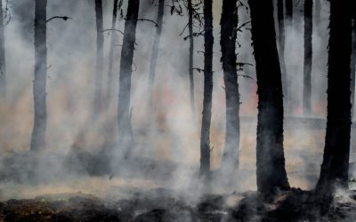 How to Prevent Property Fires By Creating a Defensible Space