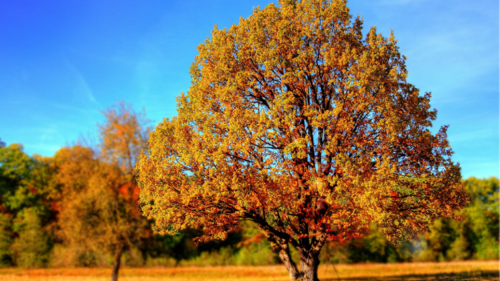 Tree Trimming: Why It's Important