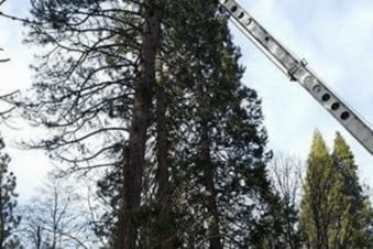 A-1 Tree Service Brush Chipping