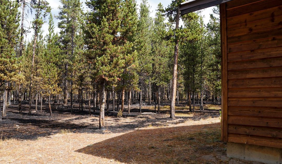 How to Create Defensible Space and Reduce Wildfire Risk Around Your Home