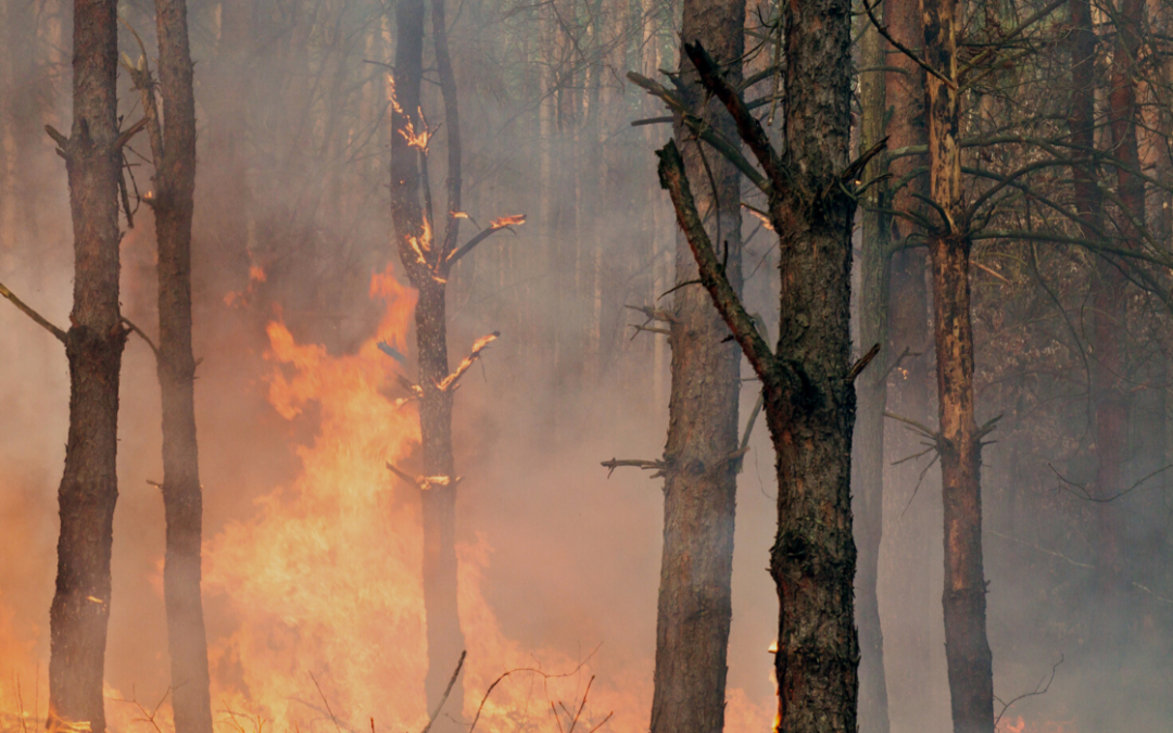 Redding California Tree Care