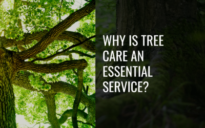 COVID-19: Why Is Tree Care an Essential Service?