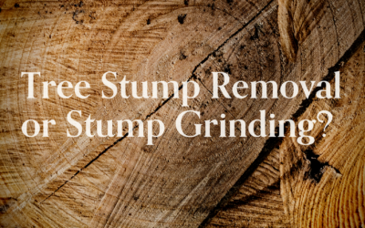 Tree Stump Removal or Stump Grinding, Which is Better?