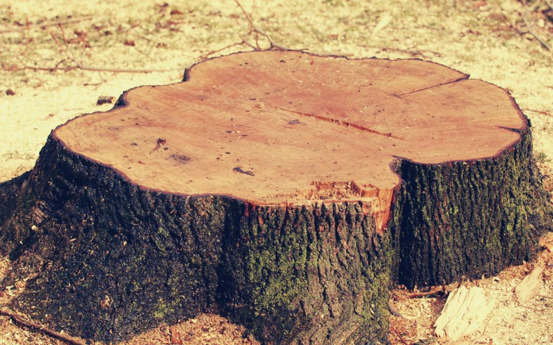 Tree Stump removal Shasta County