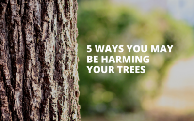 5 Ways You May Be Harming Your Trees