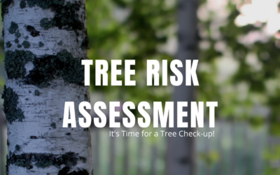 It's Time for a Tree Check-up!