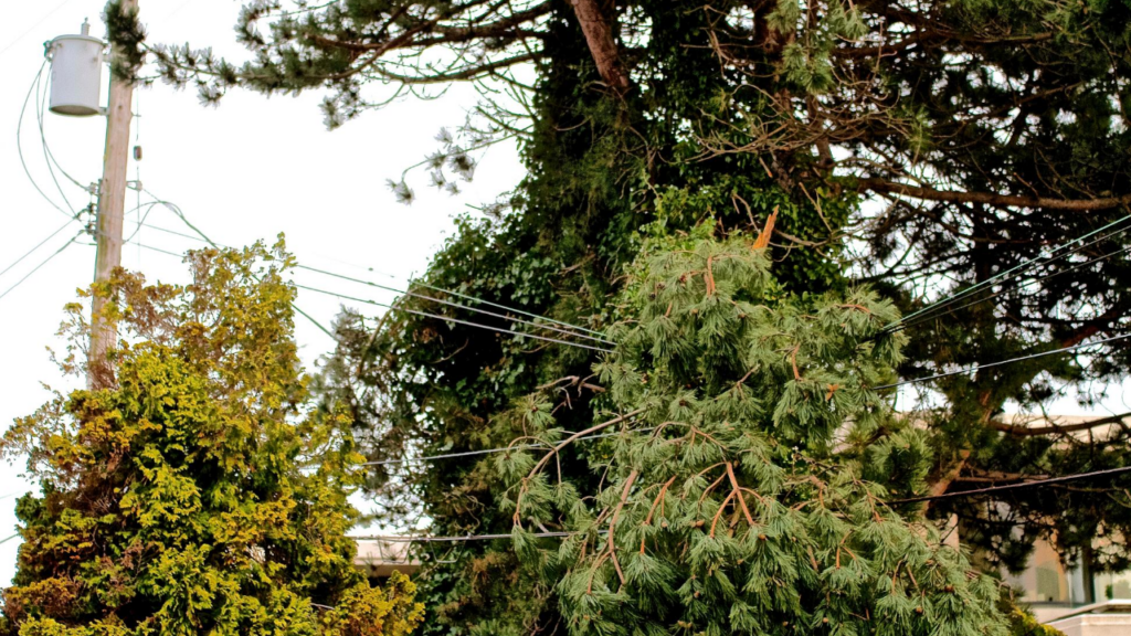 Trees falling onto power lines