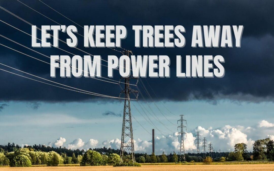 Electric Lines with trees