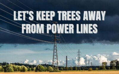 Let's Keep Trees Away from Power Lines