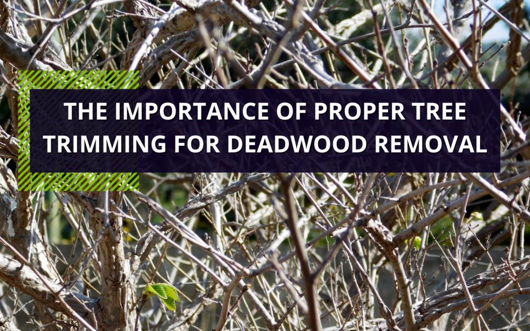 The Importance of Proper Tree Trimming For Deadwood Removal
