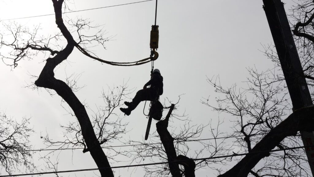 When to call a tree trimming professional
