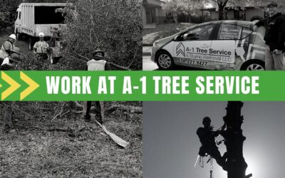 Why Work at A-1 Tree Service & Stump Removal in Redding?