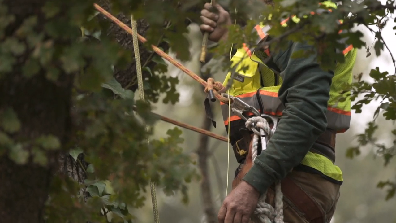 How a professional arborist can help