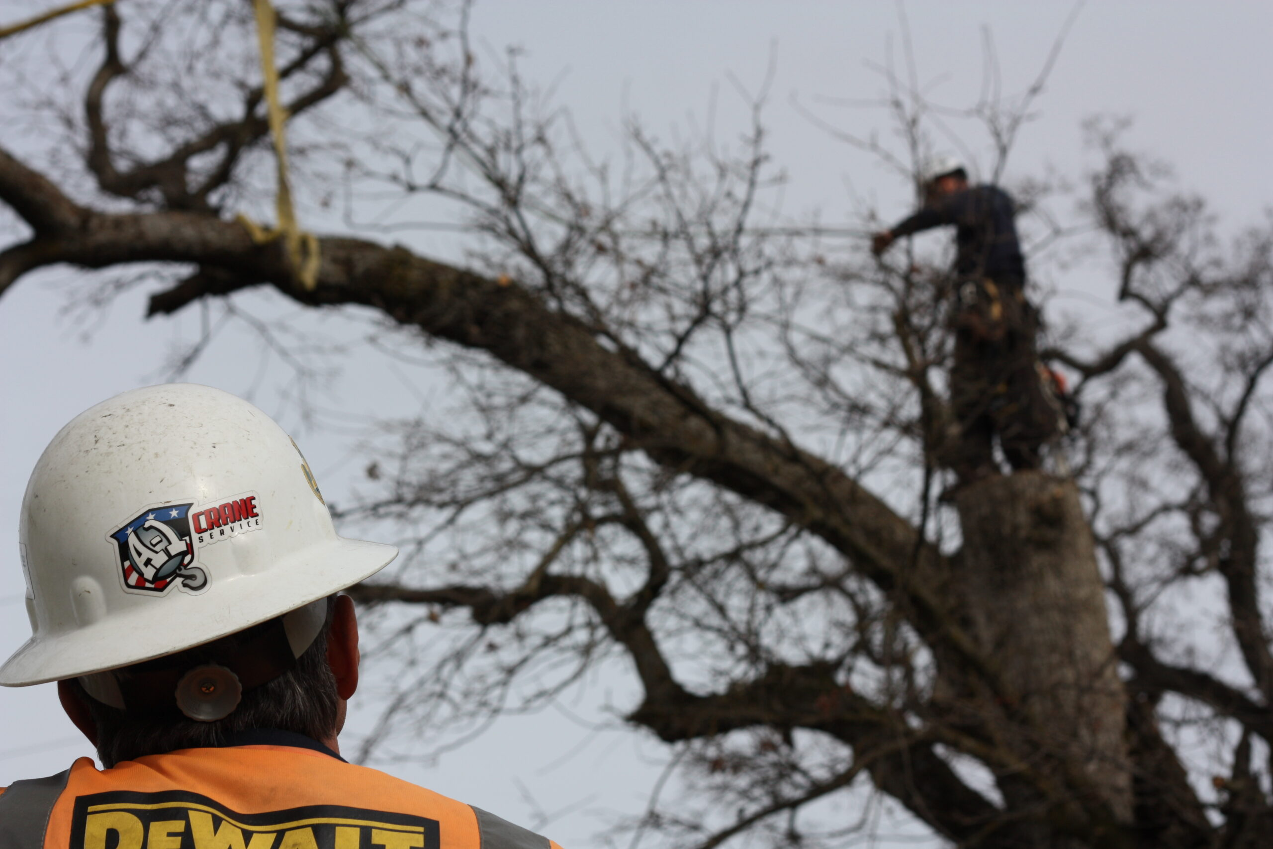 Removing Trees Safely With a Crane