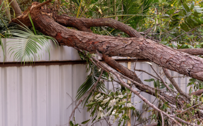 Storm Recovery and Tree Removal