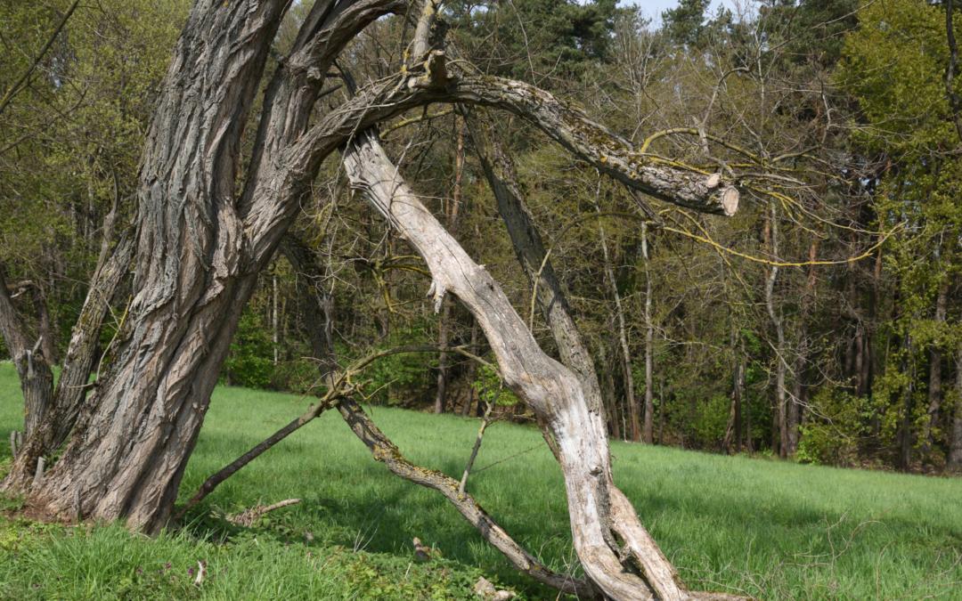 How to Recognize Deadwood