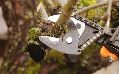Why Pruning Encourages Plants to Thrive