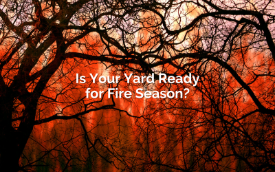 Is Your Yard Ready for Fire Season?