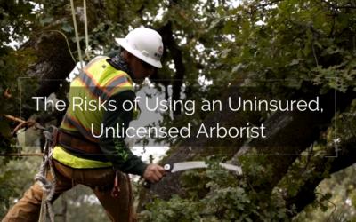 The Risks of Using an Uninsured, Unlicensed Arborist