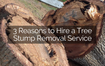 3 Reasons to Hire a Tree Stump Removal Service