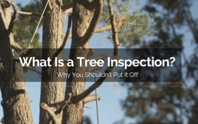 What Is a Tree Inspection? And Why You Shouldn't Put It Off